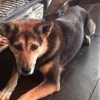 Adopt A Pet :: Autumn - Bruce Township, MI