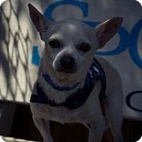 Adopt A Pet :: Boris - Lakeland, FL