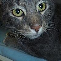 Adopt A Pet :: Budah - Hamburg, NY