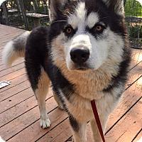 Adopt A Pet :: Henry - Santa Ana, CA