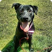 Adopt A Pet :: Piper (COURTESY POST) - Baltimore, MD