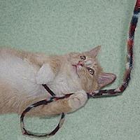 Adopt A Pet :: Paisley - Chicago, IL