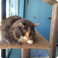 Adopt A Pet :: Squeak - Las Vegas, NV