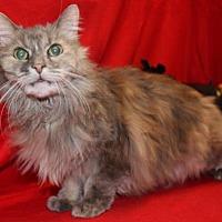 Adopt A Pet :: Sassy Sue - Hillsdale, IN
