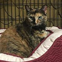 Adopt A Pet :: Tally - New City, NY