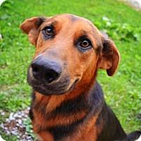 Adopt A Pet :: Bojangles (courtesy post) - Vansant, VA