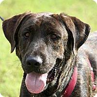Adopt A Pet :: Jake - Phoenix, AZ