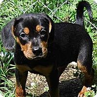 Adopt A Pet :: Trista - Bel Air, MD