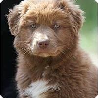 Adopt A Pet :: Lola - Providence, RI