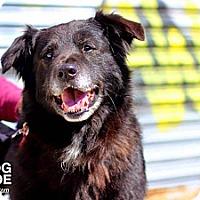 Adopt A Pet :: Kipper - Fenton, MI