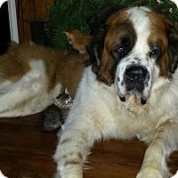 Adopt A Pet :: charlie - Henderson, KY