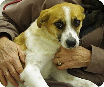 Terrier (Unknown Type, Small) Mix Dog for adoption in Elyria, Ohio - Brady