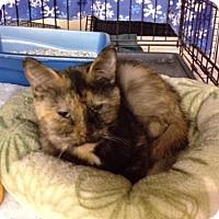 Adopt A Pet :: Missy - Byron Center, MI