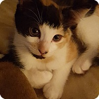 Adopt A Pet :: Mooshoo - McDonough, GA