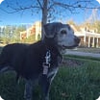 Adopt A Pet :: Camille - Homewood, AL