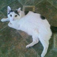 Adopt A Pet :: Thumbelina - Fullerton, CA
