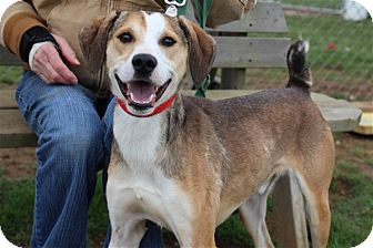 Mountain Cur Mix Dog for adoption in Elyria, Ohio - Donnie