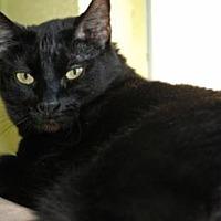 Adopt A Pet :: Itchabody - Edwards AFB, CA
