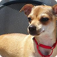 Adopt A Pet :: Channel - Bridgeton, MO