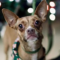 Adopt A Pet :: Coco - in Foster Care - Chino Hills, CA