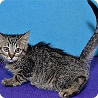 Adopt A Pet :: Paige - Lenexa, KS