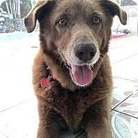 Adopt A Pet :: Kasey - New York, NY