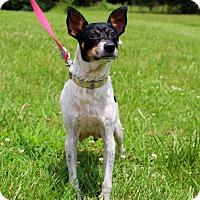 Adopt A Pet :: Demi ~ meet me! - Glastonbury, CT