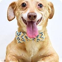Adopt A Pet :: Theodore - Dublin, CA