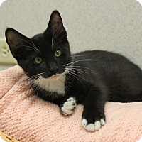 Adopt A Pet :: Russell - Naperville, IL