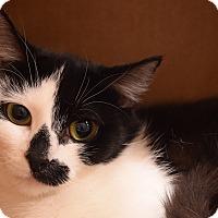 Adopt A Pet :: Oreo - Flushing, MI