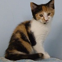 Adopt A Pet :: C - 148 Abbott - Ilderton, ON