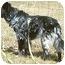 Photo 3 - Border Collie/German Shepherd Dog Mix Dog for adoption in Stephentown, New York - Misty