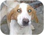 Hound (Unknown Type) Mix Dog for adoption in New Kent, Virginia - Wrangler