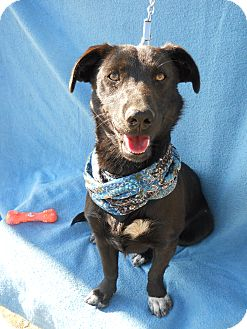 Labrador Retriever Mix Dog for adoption in Irvine, California - JESSY