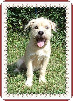 Terrier (Unknown Type, Medium) Mix Puppy for adoption in Marietta, Georgia - LUCIE