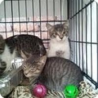 Adopt A Pet :: Jordan - Brooklyn, NY