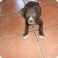 Adopt A Pet :: Loretta - San Diego, CA
