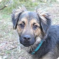 Adopt A Pet :: Cowan - Mocksville, NC