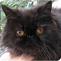 Adopt A Pet :: Rain - Davis, CA