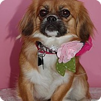 Adopt A Pet :: Matilda - Tyler, TX