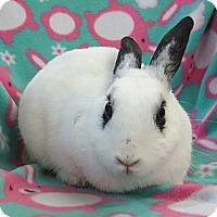 Adopt A Pet :: Panda - Los Angeles, CA