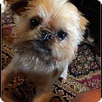 Adopt A Pet :: RAZZLE DAZZLE - ADOPTION PEND - Jackson, MS