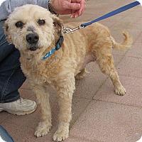 Adopt A Pet :: DUCHESS - Toluca Lake, CA