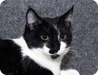Domestic Mediumhair Cat for adoption in Yorba Linda, California - Grace