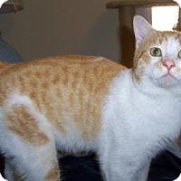 Adopt A Pet :: Stevie - Liberty, NC