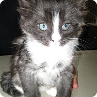 Adopt A Pet :: Nile - Jefferson, NC