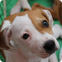 Adopt A Pet :: Sylvia - Ft. Myers, FL