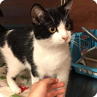 Adopt A Pet :: Gidget - Lexington, KY