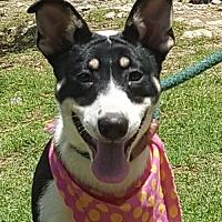Terrier (Unknown Type, Medium) Mix Dog for adoption in Lago Vista, Texas - Oreo