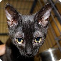Adopt A Pet :: Curry - Duluth, MN